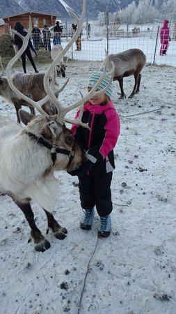 Reindeer Farm: Feeding The Reindeer