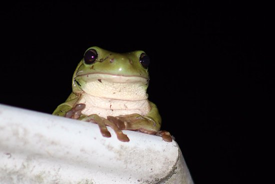 Windella, Αυστραλία: Kamikaze frog, you'll have to ask Heli and John for details :)
