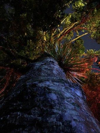 New Plymouth, Yeni Zelanda: photo7.jpg