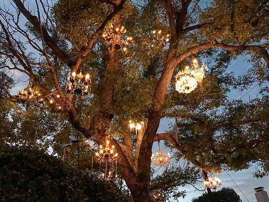 The Chandelier Tree (Los Angeles) - All You Need to Know Before ...