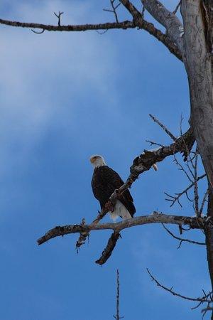 Darby, MT: photo5.jpg