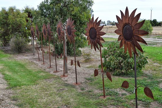 Middleton, Australia: Sunflowers