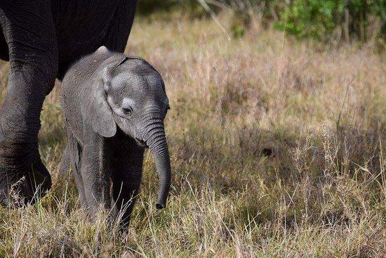 Tipilikwani Mara Camp - Masai Mara: FB_IMG_1483524014778_large.jpg