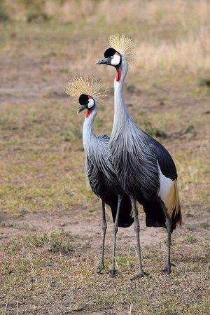 Tipilikwani Mara Camp - Masai Mara: FB_IMG_1483523997170_large.jpg