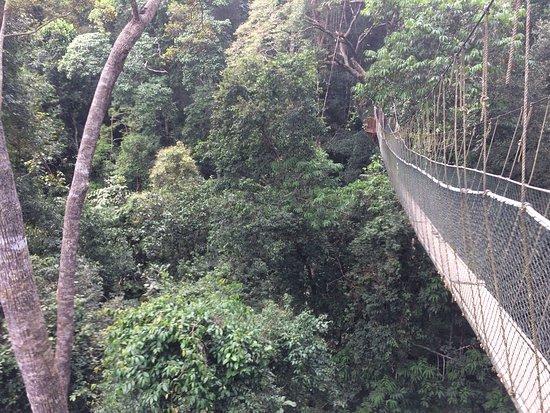 Taman Negara Canopy Walkway photo0.jpg & canopy walkway - Picture of Taman Negara Canopy Walkway Taman ...