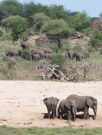Minnano Safari - Day Tours: A lot!