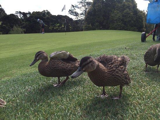 North Shore City, Nouvelle-Zélande : Nice golf course.