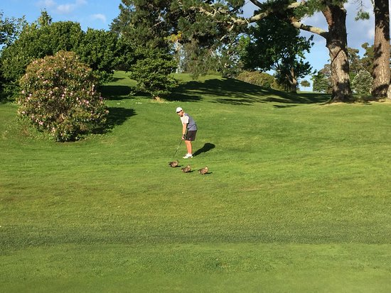 North Shore City, New Zealand: Nice golf course.