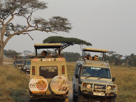 Tamaqua, Pensilvania: Our Professional drivers during game drive
