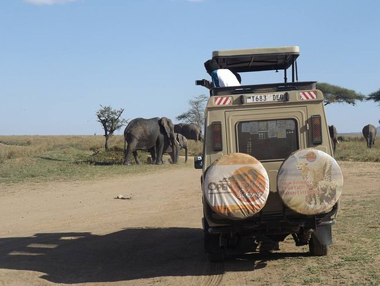 Tamaqua, Pensilvania: Game drive in Serengeti National Park