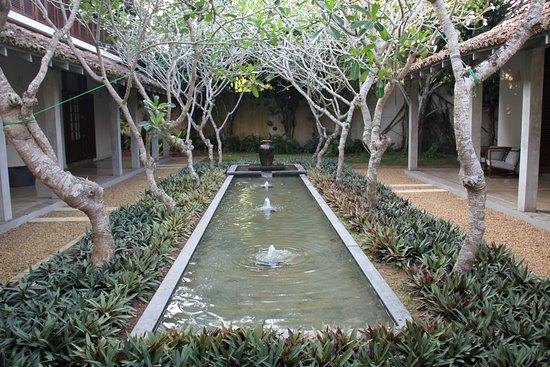 Frangipani Tree Picture