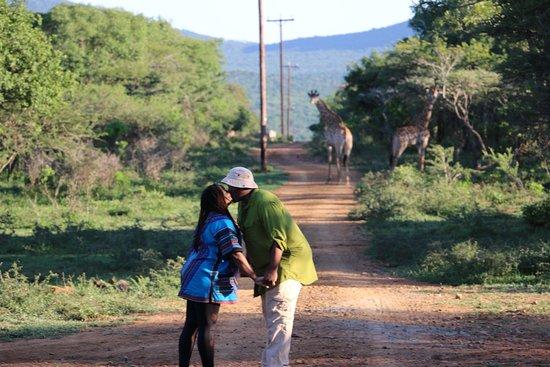 Pongola, Republika Południowej Afryki: Out on Safari