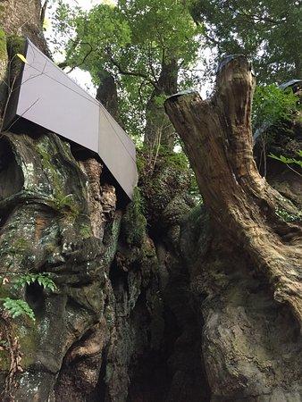 Kinomiya Shrine: photo1.jpg