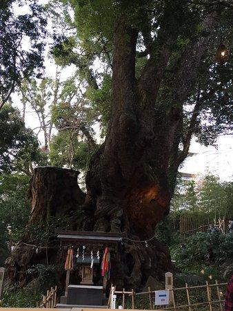Kinomiya Shrine: photo2.jpg