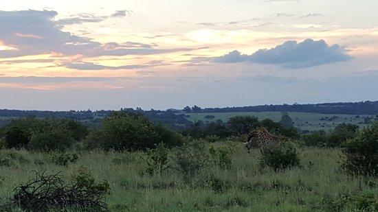 Hekpoort, Sør-Afrika: Sunset in the bush