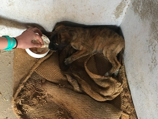 Malpura, Indie: Rescued puppy finds shelter