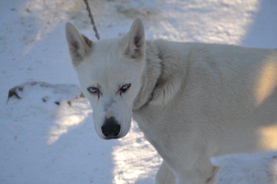Mont Tremblant Activity Centre : Beautiful dogs