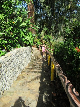 Aguila de Osa Inn: walking up to the cottages
