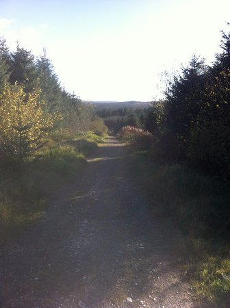 Cushendall, UK: Glenariff forest only a short drive from the village