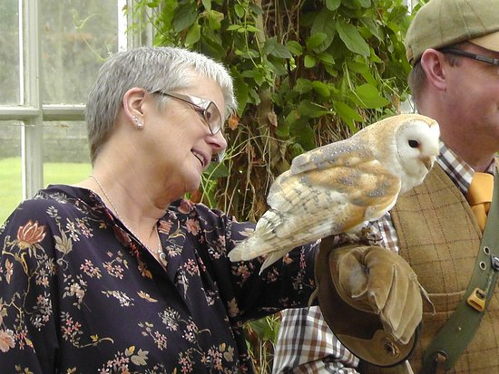 Hexham, UK: Plop the Barn Owl.