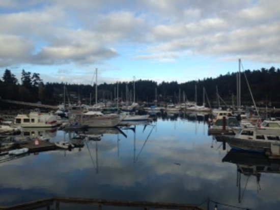 Oystercatcher Seafood Bar & Grill: Harbour views from the Oystercatcher