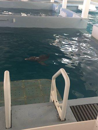 Clearwater Marine Aquarium: photo2.jpg