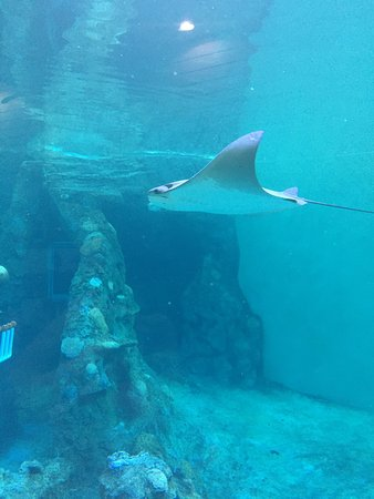 Clearwater Marine Aquarium: photo3.jpg