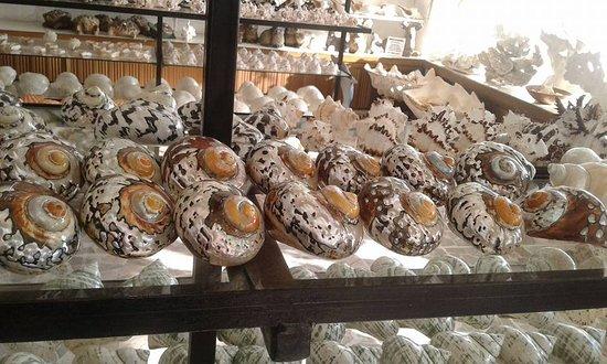 The Palms Resort Of Mazatlan: museo de las conchas