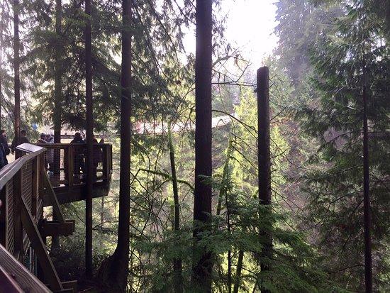 North Vancouver, Kanada: Like an Ewok