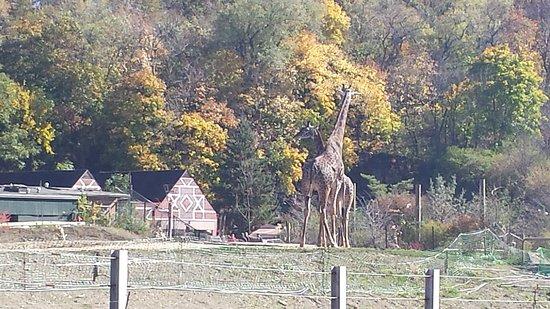 Pittsburgh Zoo & PPG Aquarium: 20141026_125904_large.jpg