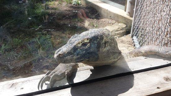Pittsburgh Zoo & PPG Aquarium: 20150923_123847_large.jpg