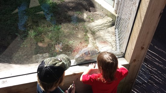 Pittsburgh Zoo & PPG Aquarium: 20150923_123856_large.jpg