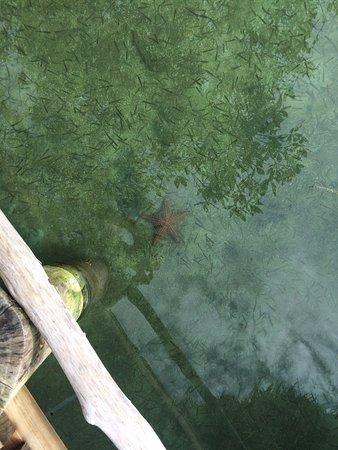 Isla Popa, Panama: The water is crystal clear.