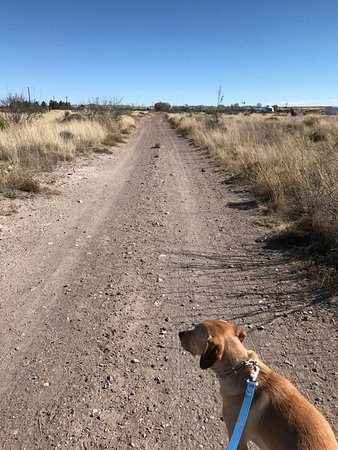 Tumble In Marfa RV Park: Walking path great for the dog