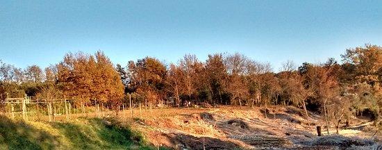 Foto di Marialuisa. Gennaio 17, Lavorazione  del terreno per lan semina delle Patate