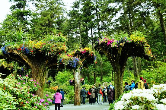 Famous upside down trees filled with flowers picture of glacier gardens rainforest adventure - Upside down gardening ...