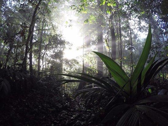 Heliconias Lodge: Laguna Danta trail