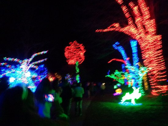 Meadowlark Botanical Garden: Lights 11