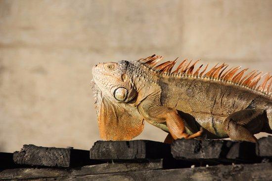 Boat Rental Miami : Iguanes