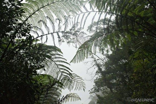 Baja Verapaz Department, Guatemala : Bosque nuboso