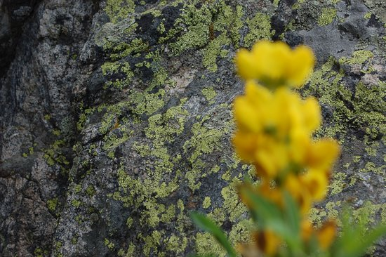 Lichen picture of bear lake rocky mountain national park bear lake lichen sciox Image collections