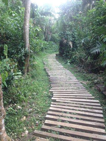 Uganda: Bigodi walking trail