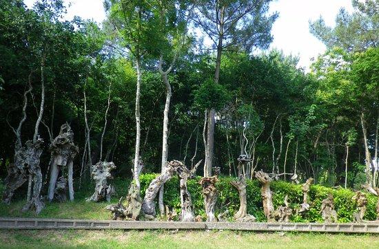 Ploemel, فرنسا: les souches