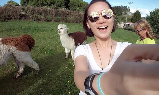 Waitomo Big Bird Bed & Breakfast: Me trying to get a wefie with the male alpaca