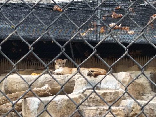 Orange County Zoo: 20170104_122254_large.jpg