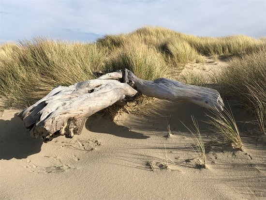 Reedsport, Oregón: Drift wood on the shore