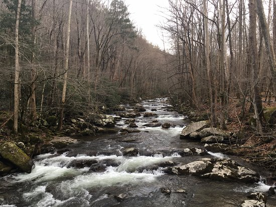 Great Smoky Mountains National Park, Carolina del Norte: campsite was next to a creek