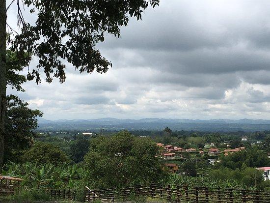 Hacienda Combia: Flora of the plantation