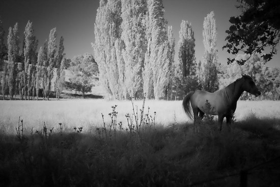 Fentonbury, Australia: and horses too!