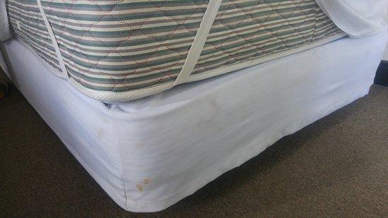 Mango Park Hotel: bed bugs killed ?